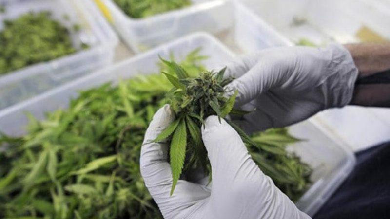 Scopri i benefici della Cannabis light